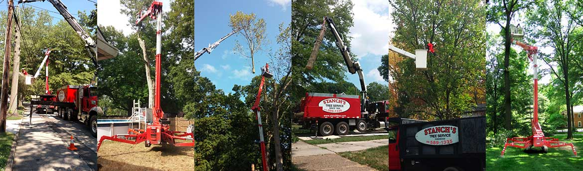 Tree Service for Somerdale, NJ