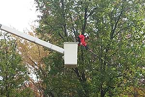 Tree Trimming Services in South Jersey