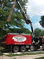 Our equipment also doubles as a hauler to remove trees and leave your property clean and tidy