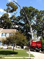 Our large booms allow clean and safe removal of the largest trees