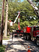 Tree removal around power lines requires both the right equipment and skill